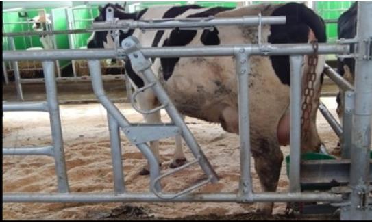 Родильные боксы для коров
