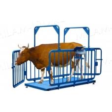 Весы для взвешивания скота